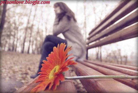 عکس+عشق+و+گل